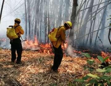 """El gobernador de Santa Cruz declaró la emergencia como """"desastre departamental"""". Foto: @Conafor (referencial)"""