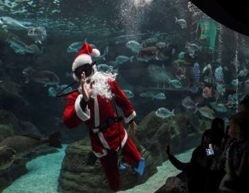Esta presentación se dio en el zoológico de Guadalajara. Foto: AFP