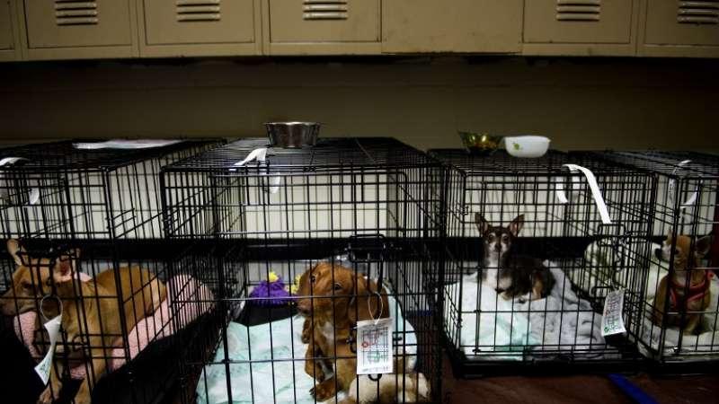 Las mascotas también son resguardadas ante la llegada del huracán Michael en Florida Foto: AFP